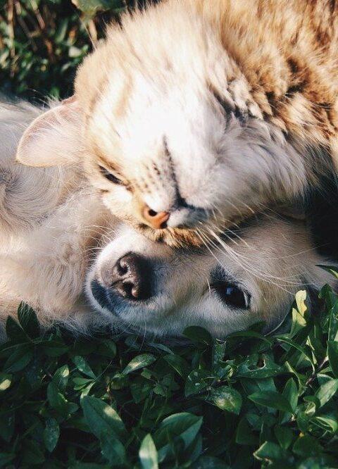 Je huisdier mag ook wel eens verwend worden