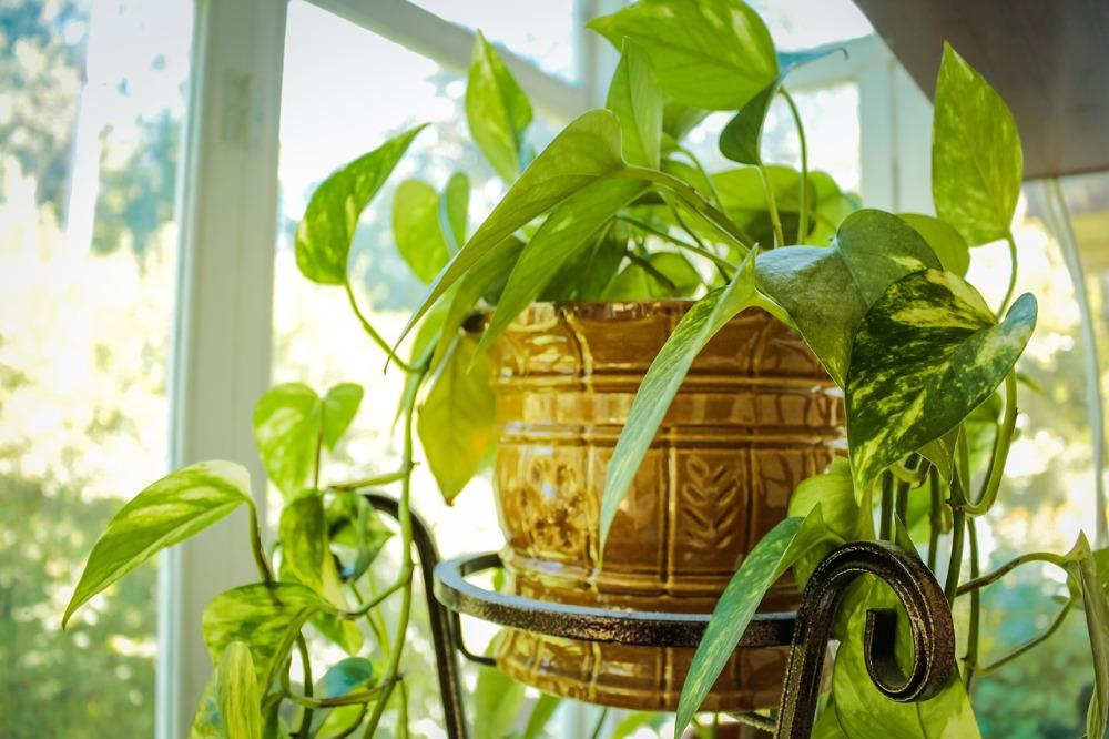 Planten in huis verdrijven de stress